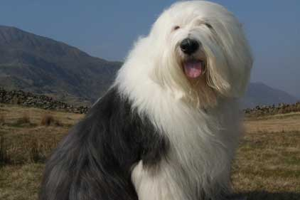 Dulux dog: one of the AkzoNobel brands