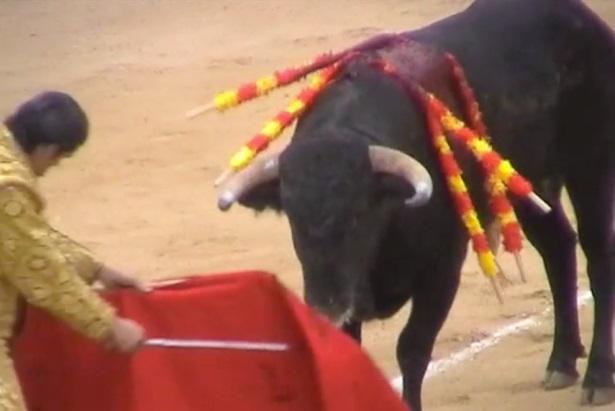 Running of the Bulls: PETA hopes to raise awareness among tourists