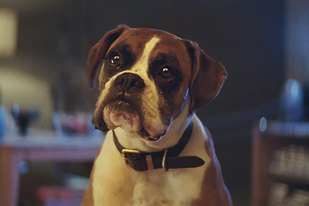 Last year's 'Buster the boxer' ad was directed by Dougal Wilson