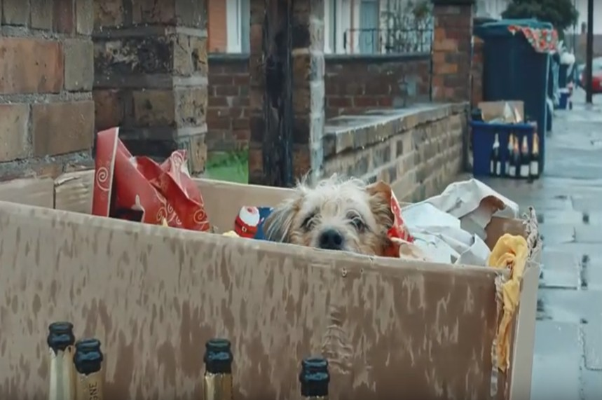 A dog left out in the trash after Christmas