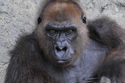 Dublin Zoo: hires Pembroke Communications