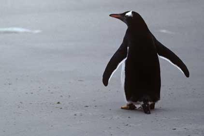 Profitable: Falkland Islands