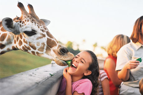 Just the ticket: Brief for Brighter Group (Credit: 2013 SeaWorld Parks & Entertainment Inc. All rights reserved)
