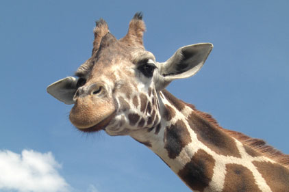 Chester Zoo: hires agency