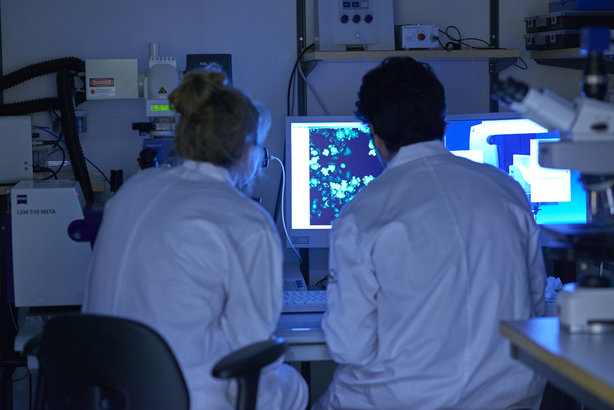 Researchers at Hamlet Pharma's lab at the University of Lund in Sweden, examining images of lung cancer cells
