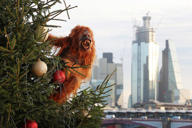 An orangutan is on the loose in London this morning