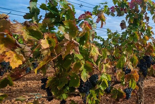 Spanish regions are well known for their Tempranillo and Verdejo grapes (Image: José Berdón).