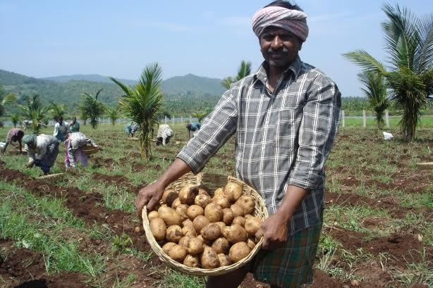 A potato farmer in India harvesting crops as a result of PepsiCo's agriculture and water conservation efforts in 2010. (Image via PepsiCo).
