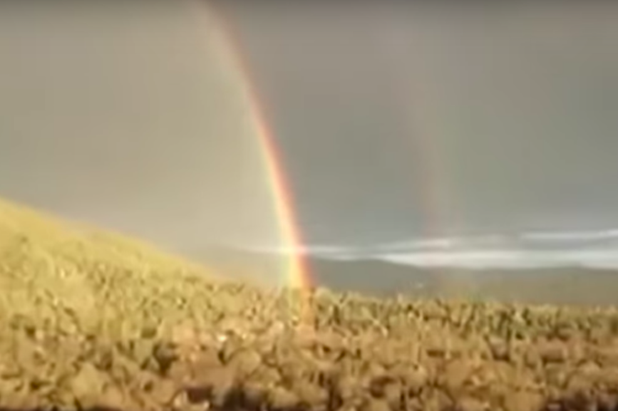 Viral video sensation 'double rainbow guy' dies at 57