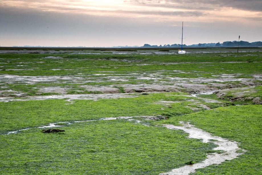 An algal bloom on the Solent shore - image: Julian Dodd