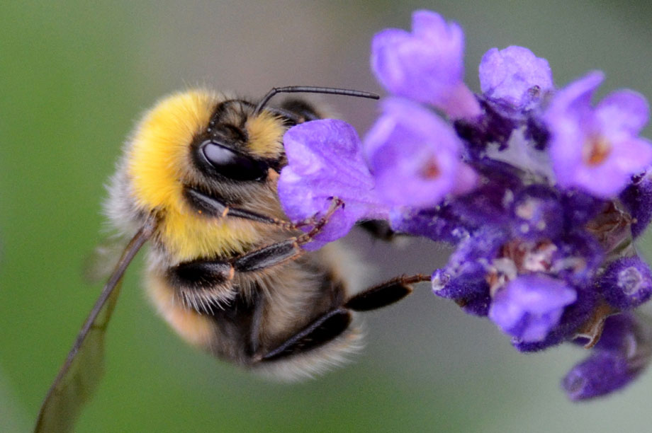 Biodiversity: Environment Bill intended to help reverse decline in wildlife (pic: Noel Reynolds, Flickr)