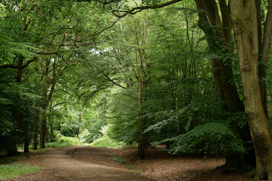 Epping Forest. (Image by Peter Trimming, Flickr)