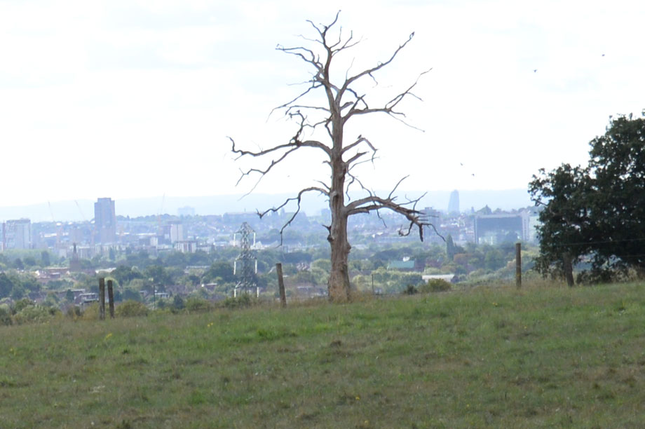 London green belt: warnings over soundness of key London Plan policy